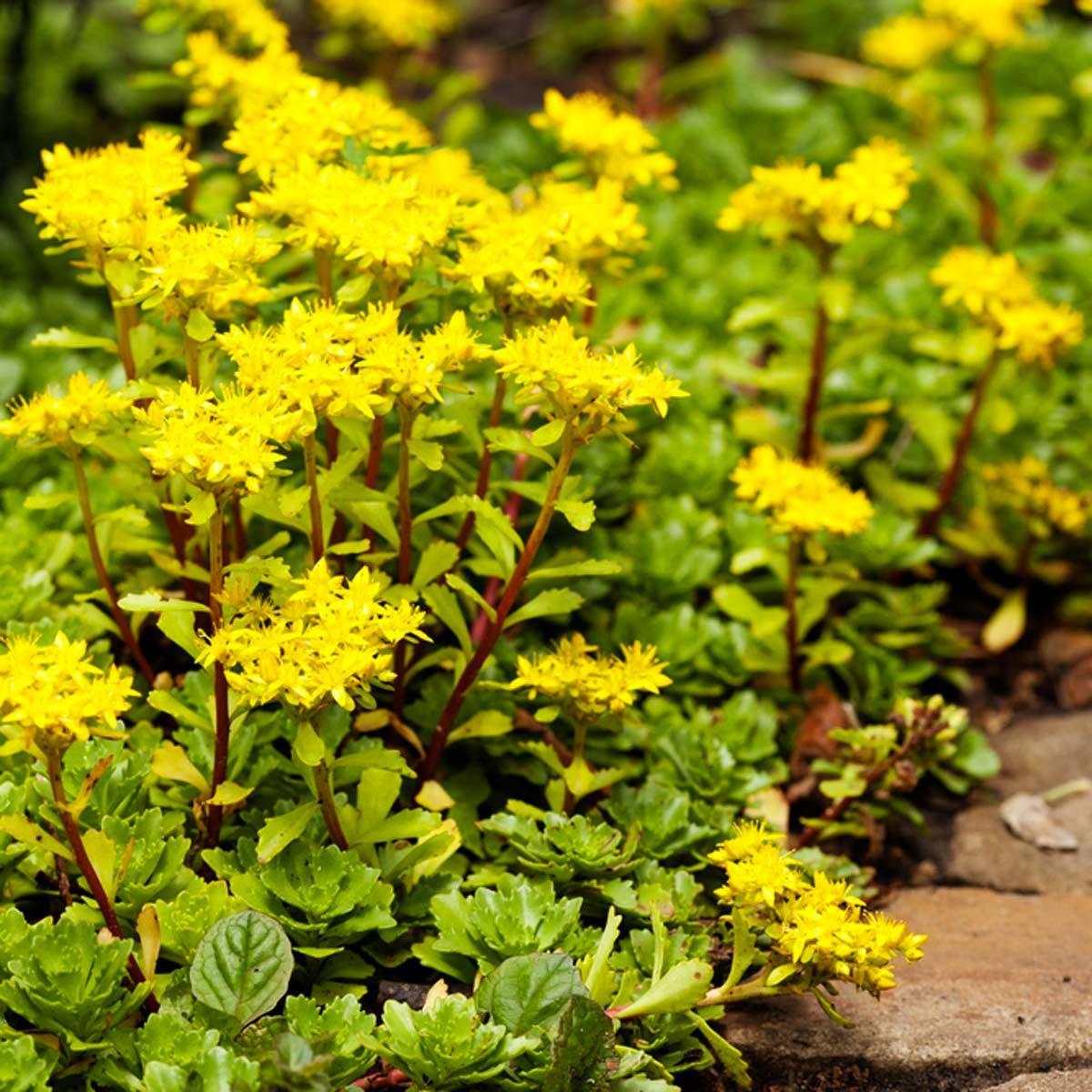 Aménagement paysager : choisissez des plantes dont la taille correspond à l'espace du jardin.