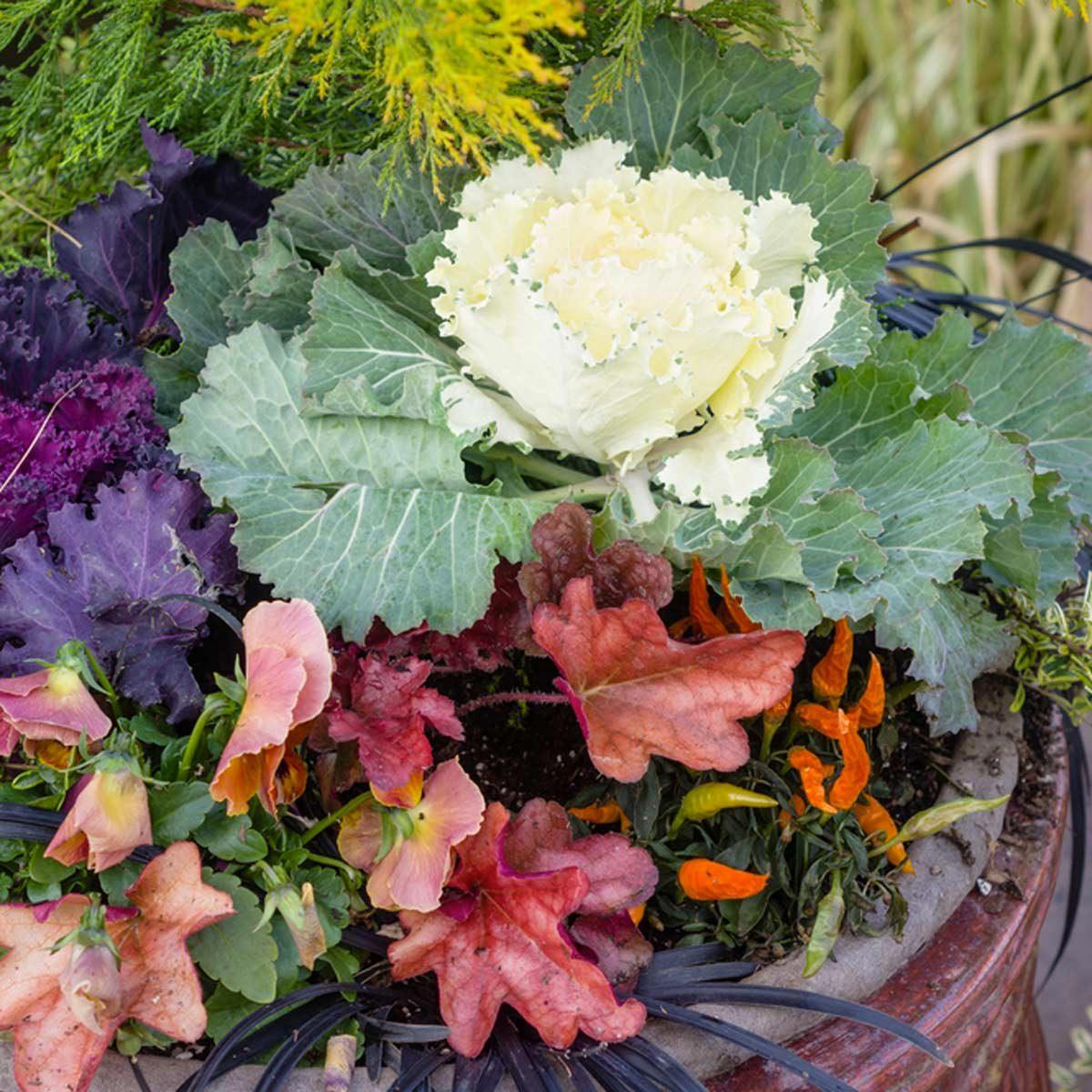 Aménagement paysager : pensez feuillage, pas fleurs.