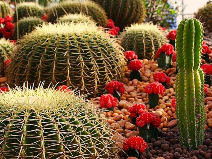 Aménagement paysager: associez des plantes compatibles.