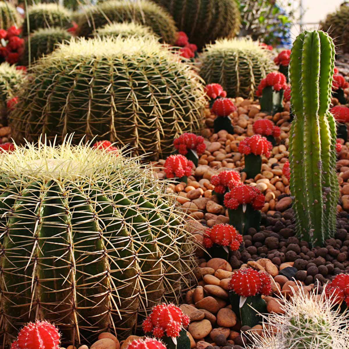 Aménagement paysager : groupez les plantes selon leur type de terre et leur niveau d'ensoleillement.