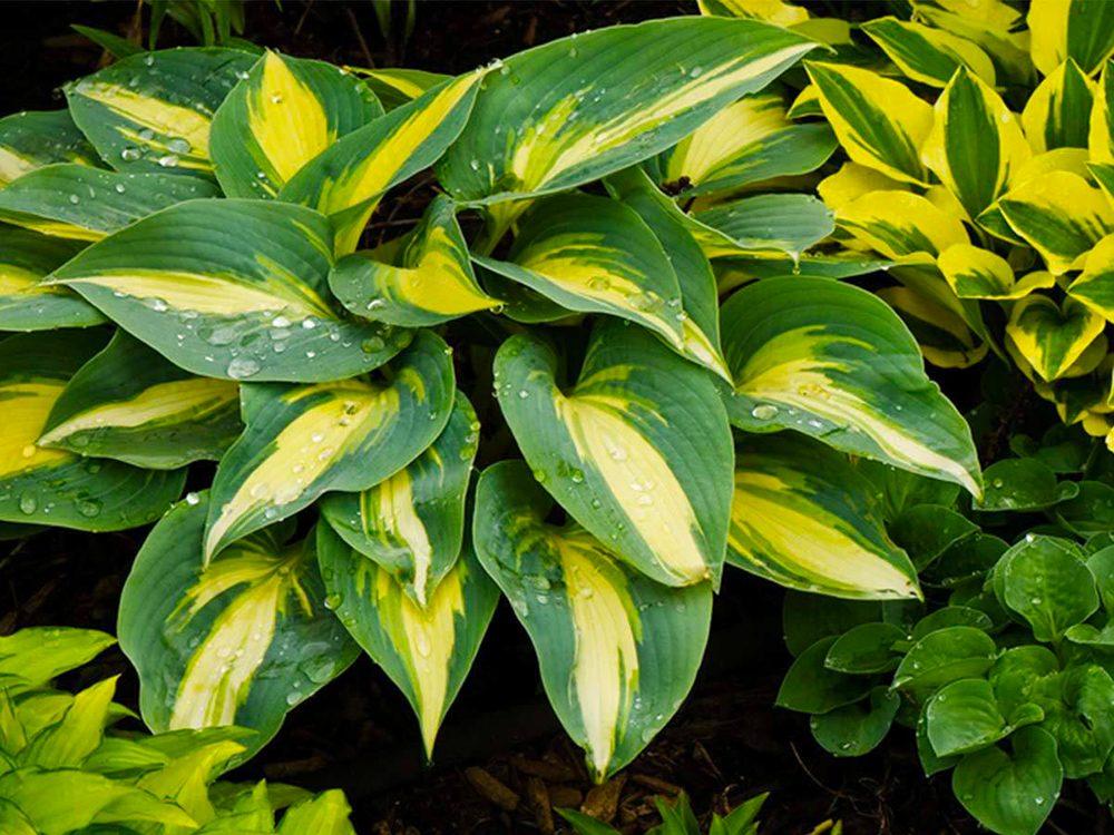 Aménagement paysager: investissez dans l'or des jardiniers.