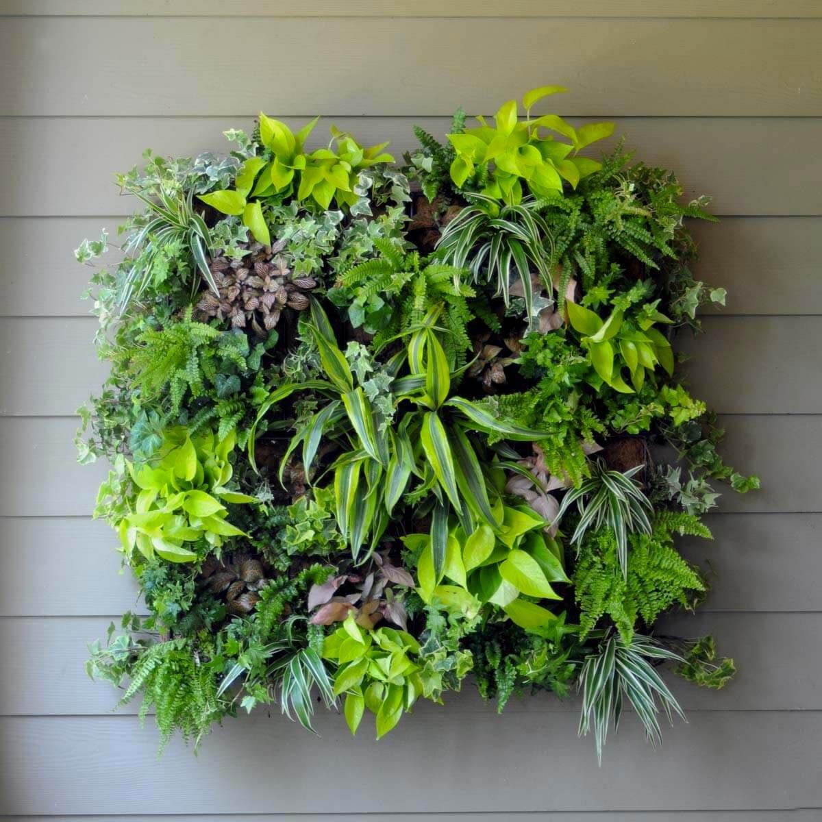 Aménagement paysager : plantez un mur vivant.