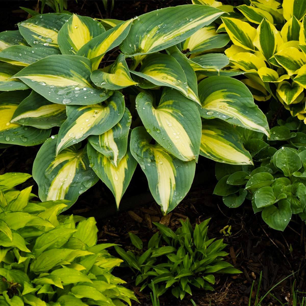 Aménagement paysager : investissez dans l'or des jardiniers.