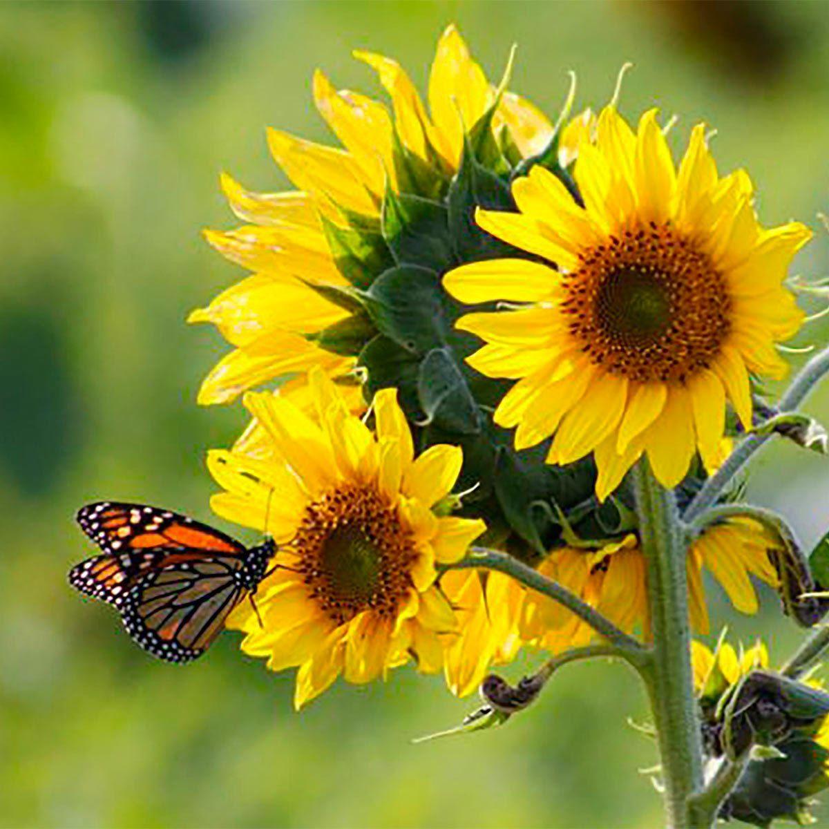 Aménagement paysager : apprenez à connaître votre jardin.