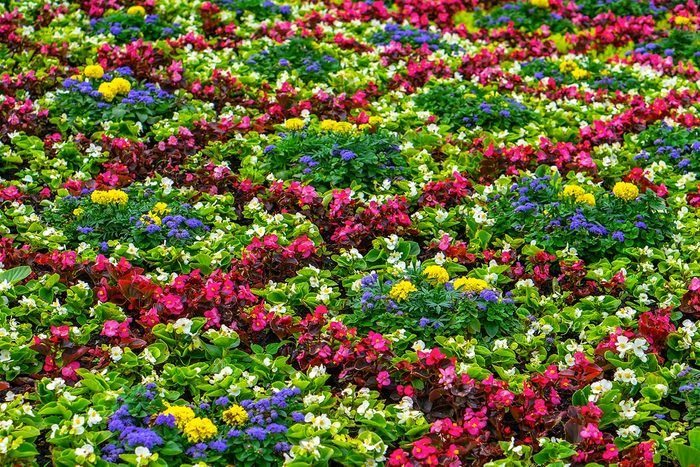 Aménagement paysager : mettez de la couleur.