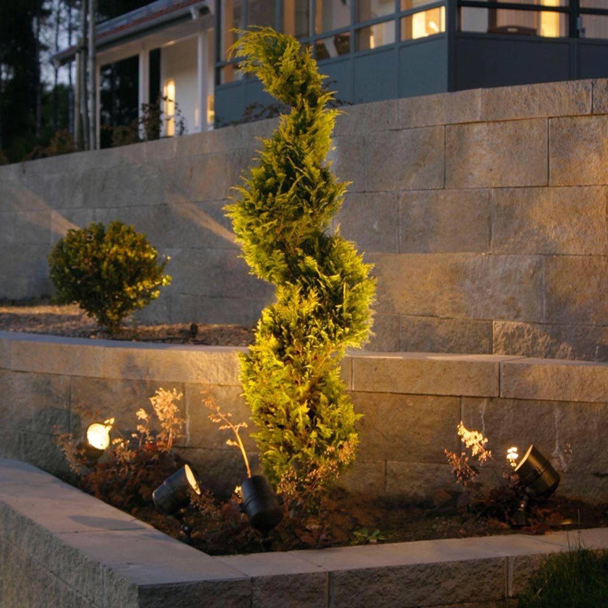 Aménagement paysager : choisissez des plantes extravagantes qui attirent l'oeil.