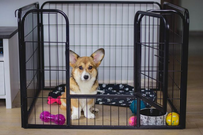 Dressage de chiot : entraînez-le à utiliser sa cage.