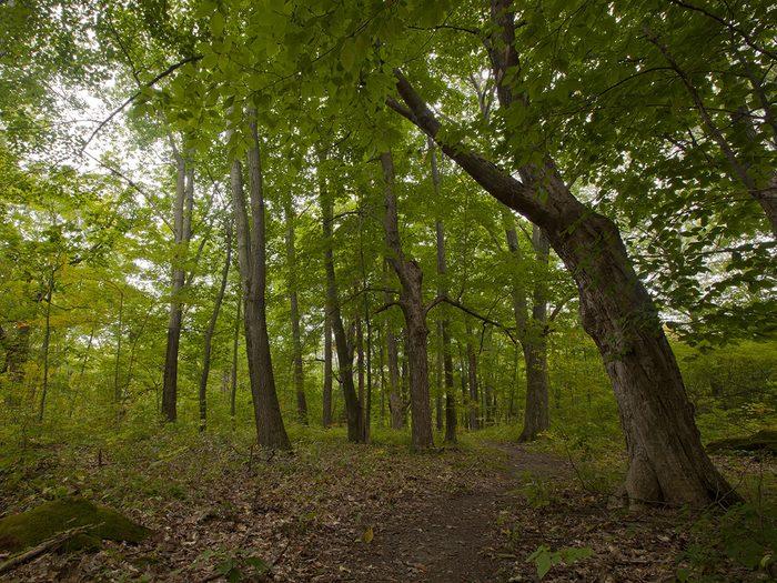 La forêt de Freetown-Fall River est l'une des forêts hantées du monde.