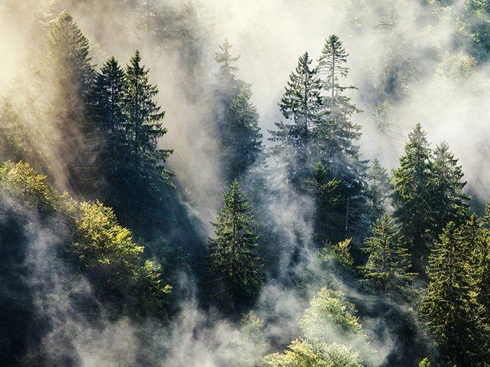 La Forêt-Noire est l'une des forêts hantées du monde.