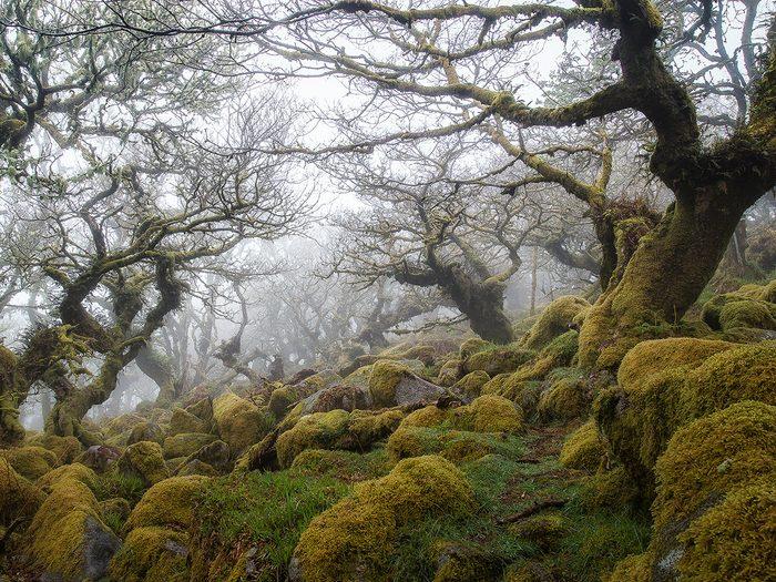 Le bois de Wistman's est l'une des forêts hantées du monde.