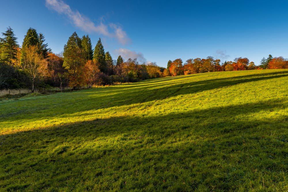 Forêts hantées : la forêt de Blairadam, Écosse.
