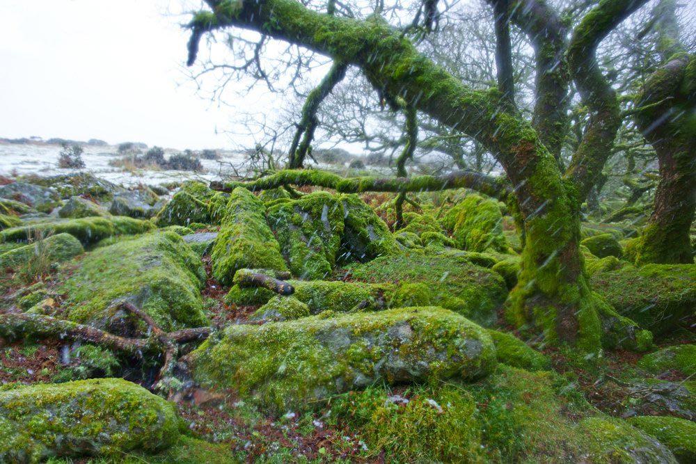 Forêts hantées : le bois de Wistman's, Angleterre.