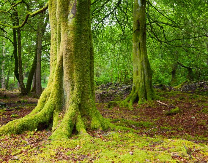 Forêts hantées : Doon Hill, Écosse