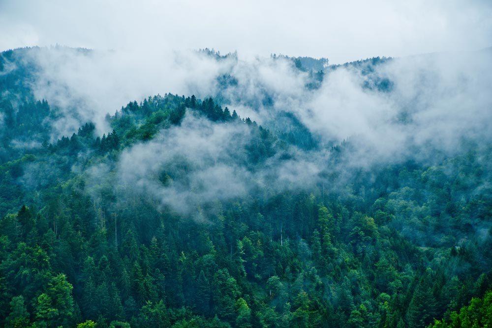 Forêts hantées : la Forêt-Noire, Allemagne.