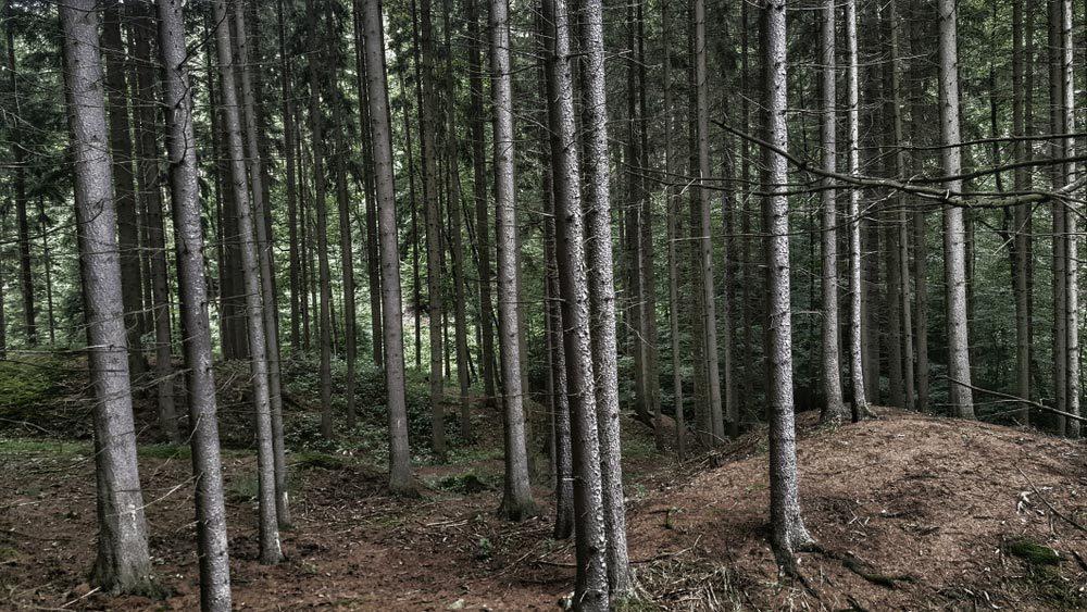 Forêts hantées : la forêt de Freetown-Fall River, Massachusetts.