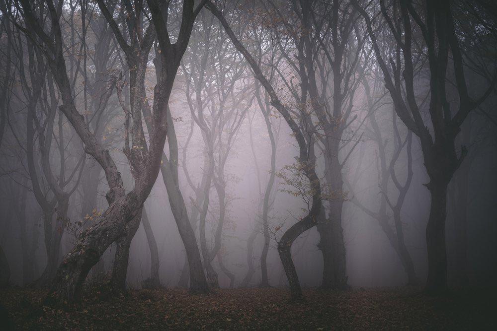 Forêts hantées : la forêt d'Hoia-Baciu, Roumanie.