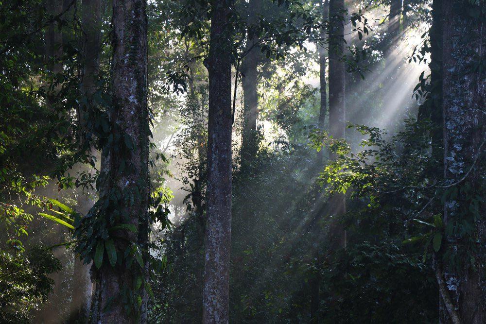 Forêts hantées : le parc national Tawau Hills, Malaisie.