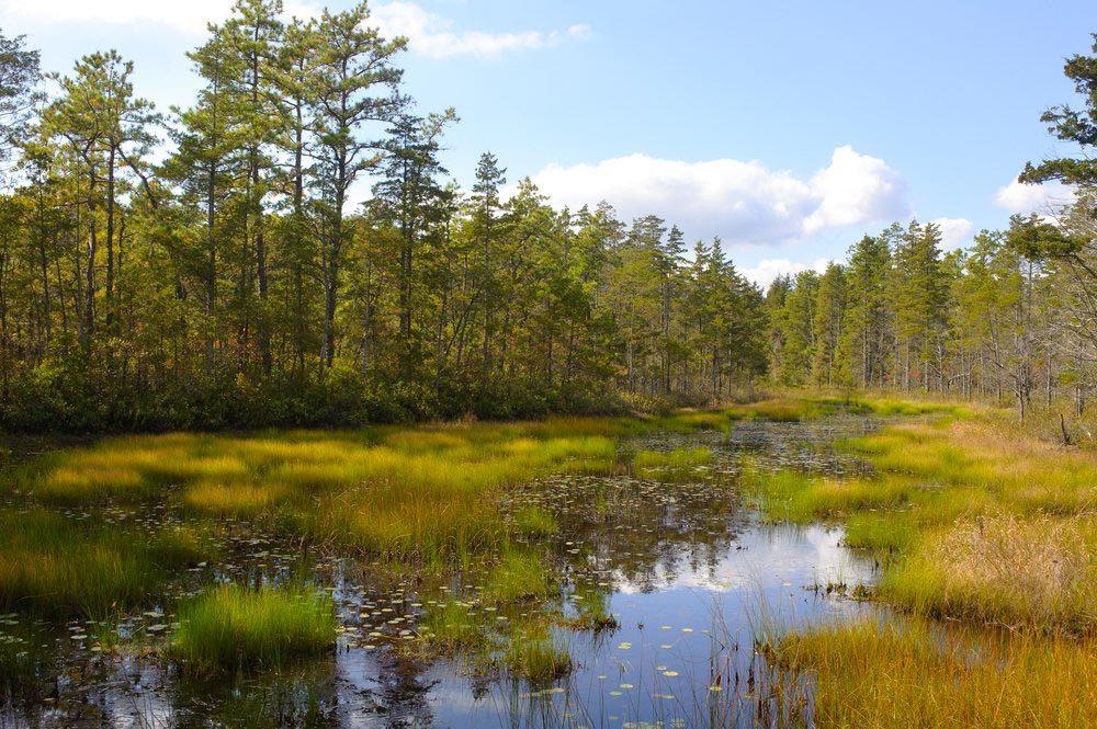 Forêts hantées : Pine Barrens, New Jersey