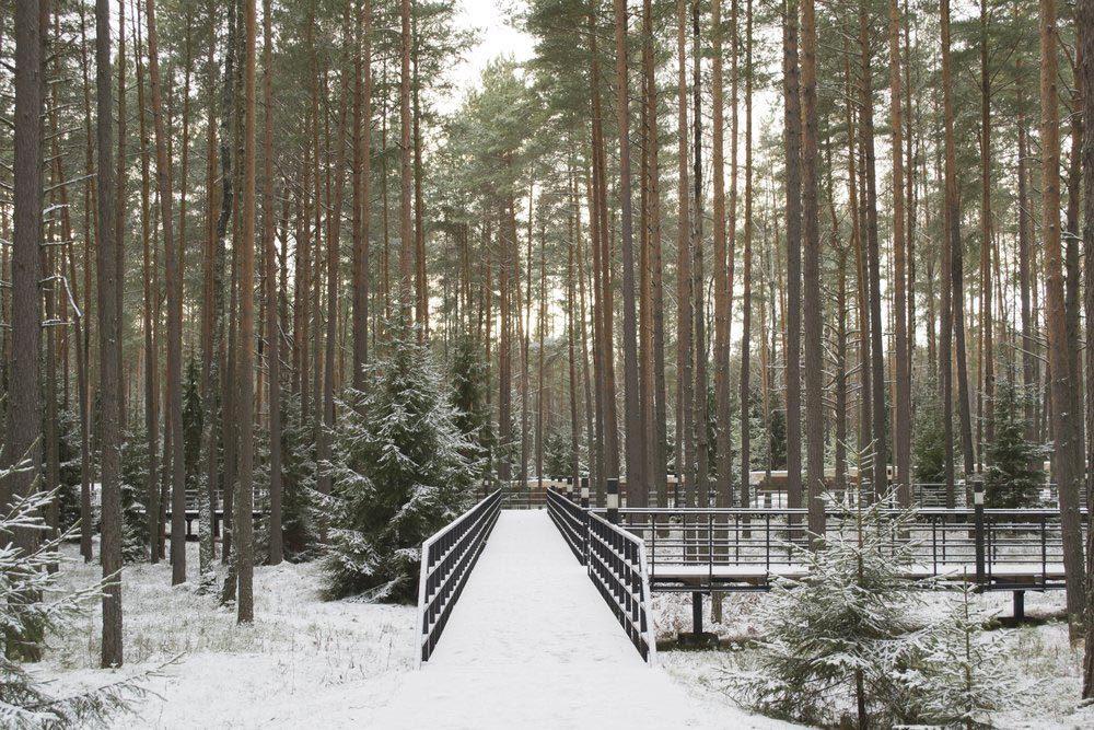 Forêts hantées : la forêt de Smolensk, Russie.