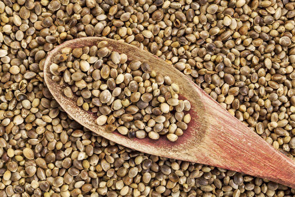 Source de protéines : les graines de chanvre.