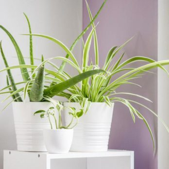 Les meilleures plantes pour purifier l'air, selon la NASA