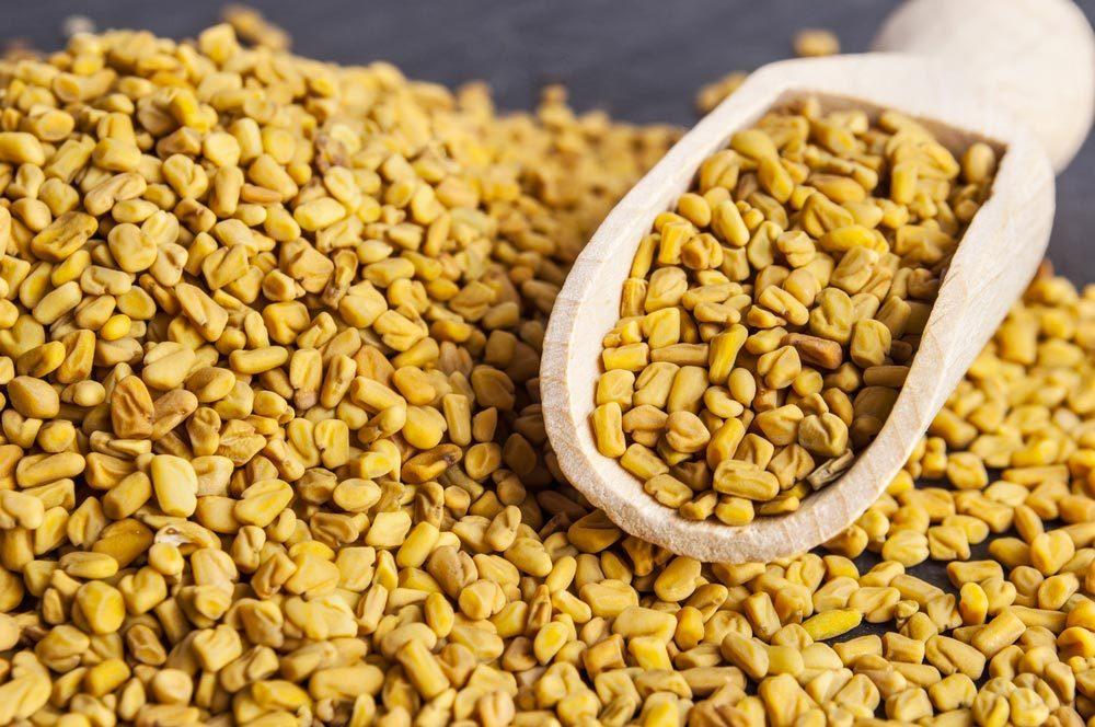 Source de protéines végétales : le fenugrec.