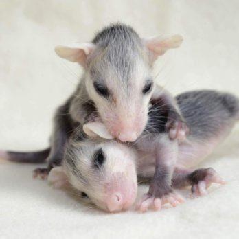 17 adorables bébés animaux