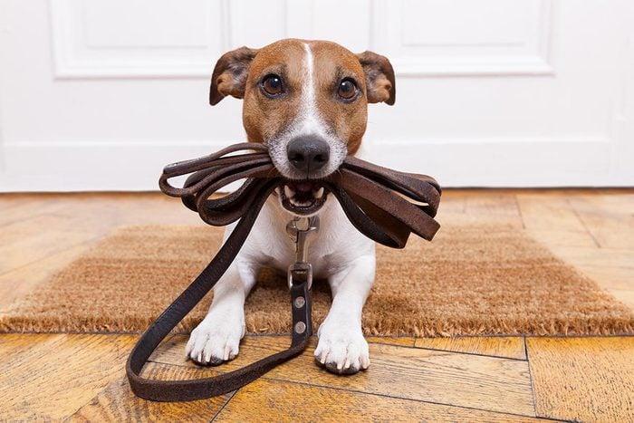 Les cardiologues adoptent un chien.