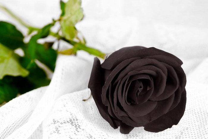 Couleurs de roses : noir pour la perte et le manque.