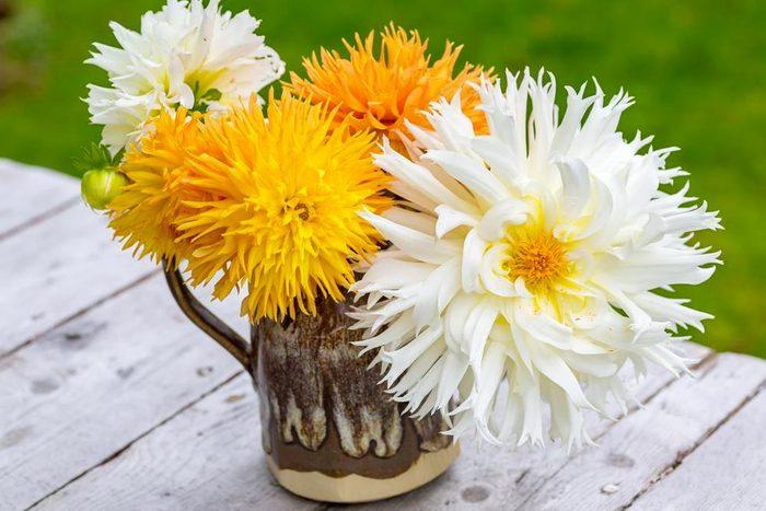 Couleurs de roses et autres fleurs : le dahlia pour la reconnaissance.