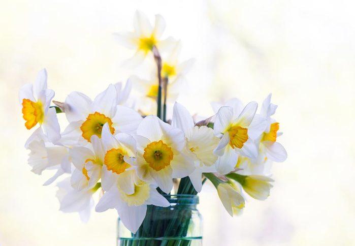 Couleurs de roses et autres fleurs : la jonquille pour le désir et l'espoir.