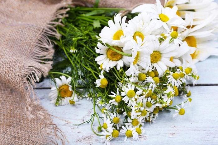 Couleurs de roses et autres fleurs : la marguerite pour la beauté et l'insouciance.