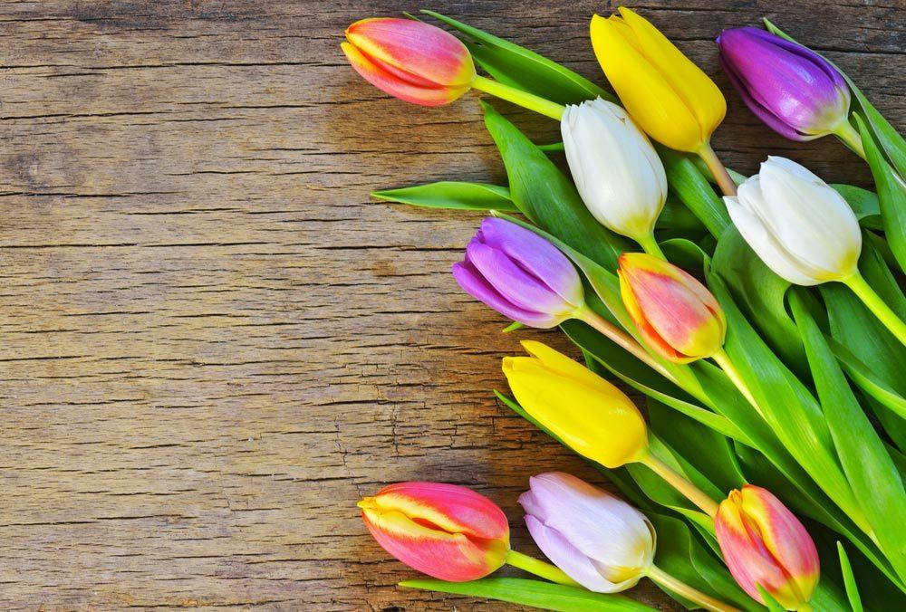 Couleurs de roses et autres fleurs : des tulipes pour lui montrer vos sentiments.