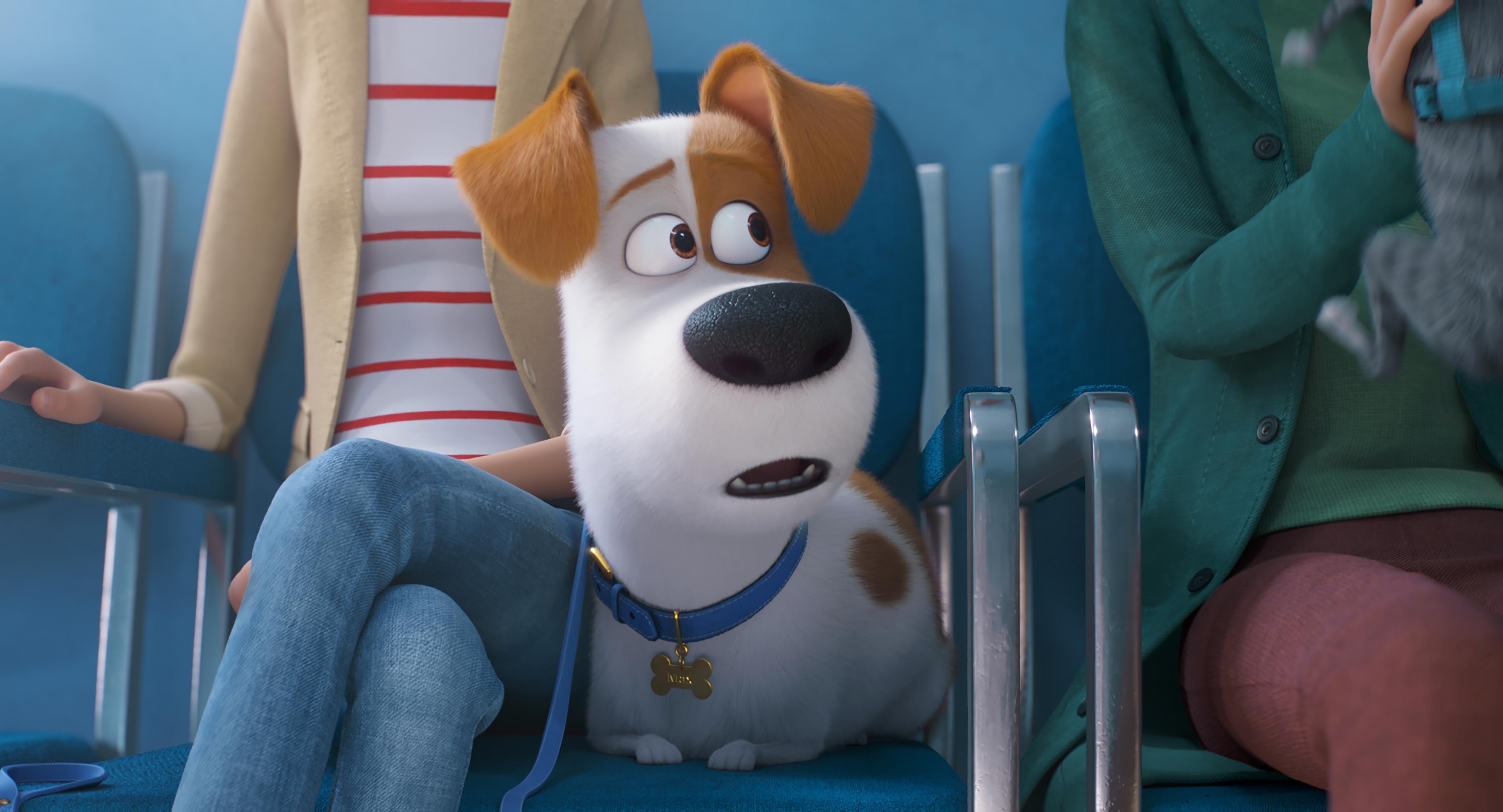 Film à voir : Comme des bêtes 2 (The Secret Life of Pets 2)