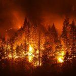 Faut-il craindre plus de feux de forêt cet été?