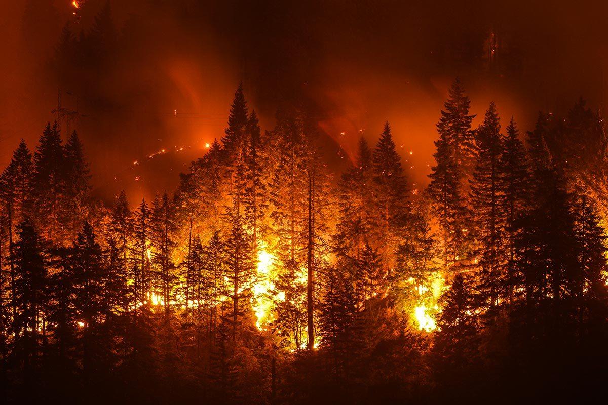 Histoires insolites vraies : un douanier américain a déclenché un feu de forêt.