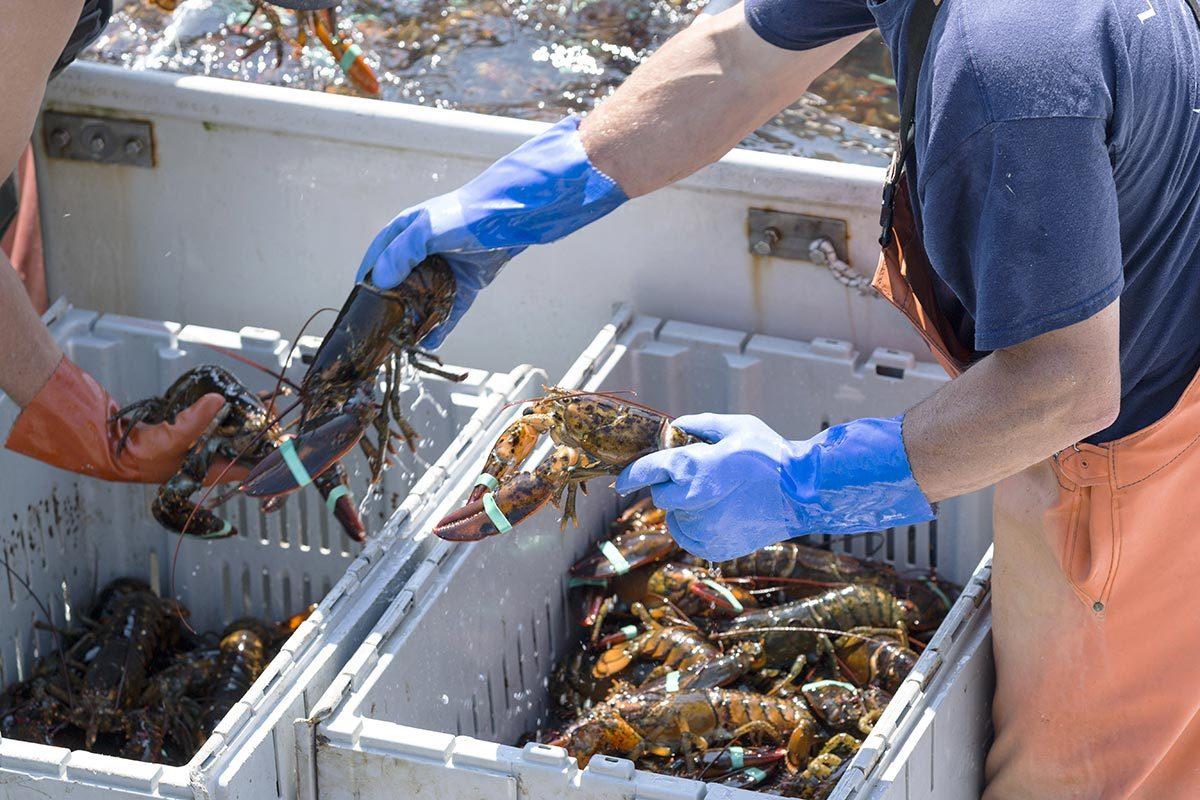 Combien pèse la pêche au homard au Canada?