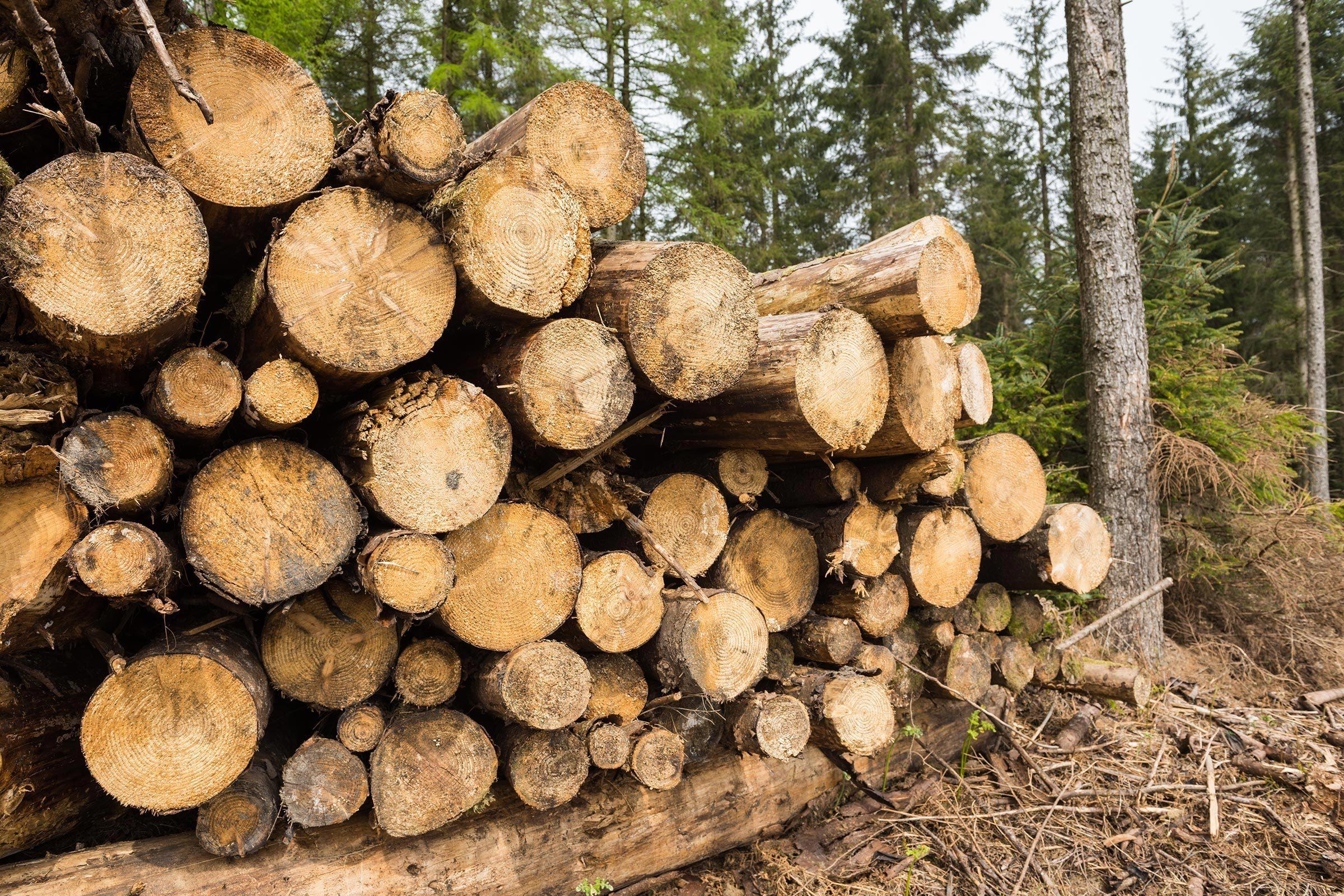 Utilisation du papier : à eux seuls, les Américains utilisent 68 millions d'arbres par an.
