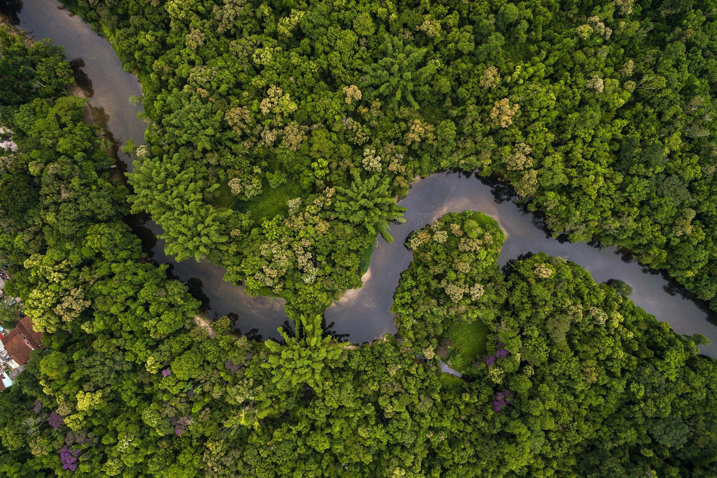 Les forêts donnent au monde bien plus que du papier.