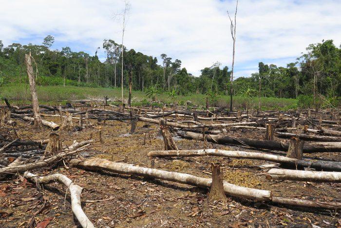La déforestation pour produire du papier détruit les habitats.