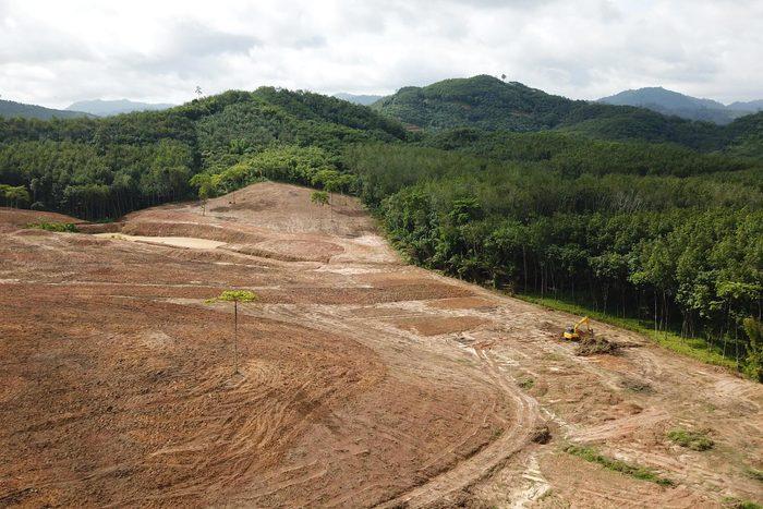 Production de papier : la déforestation contribue au réchauffement de la planète.