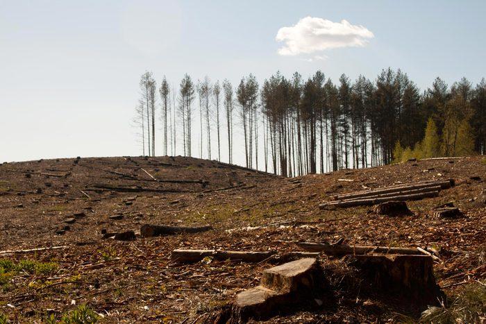Production de papier : des forêts autrefois luxuriantes deviennent des déserts.