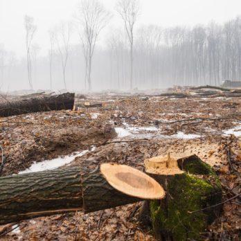 Production de papier : il faut moins de temps pour couper un arbre que pour en faire grandir un.