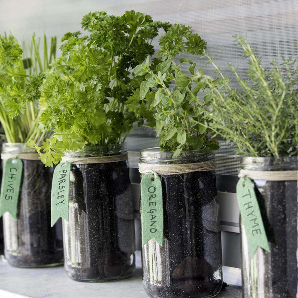 Sauver la planète : cultivez des herbes aromatiques avec ces pots Mason.