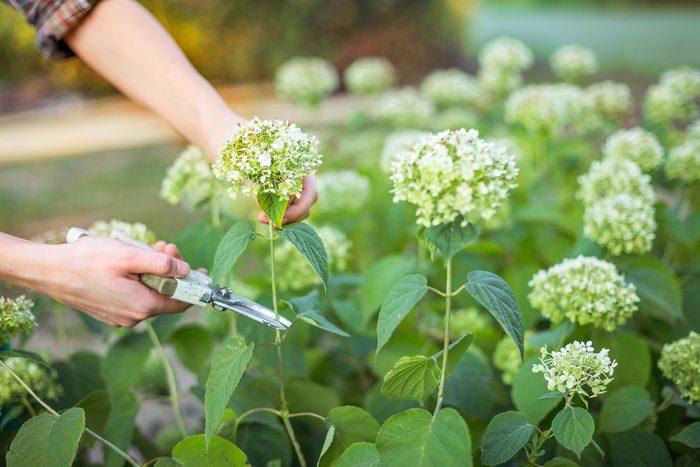 Le vinaigre aide à garder ses fleurs fraîches plus longtemps.