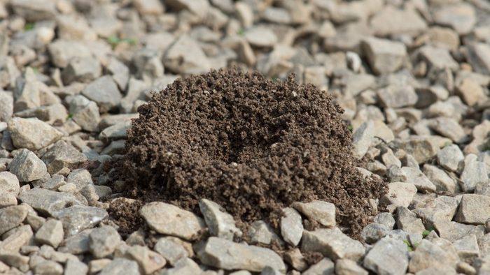 Les fourmis détestent l'odeur du vinaigre.