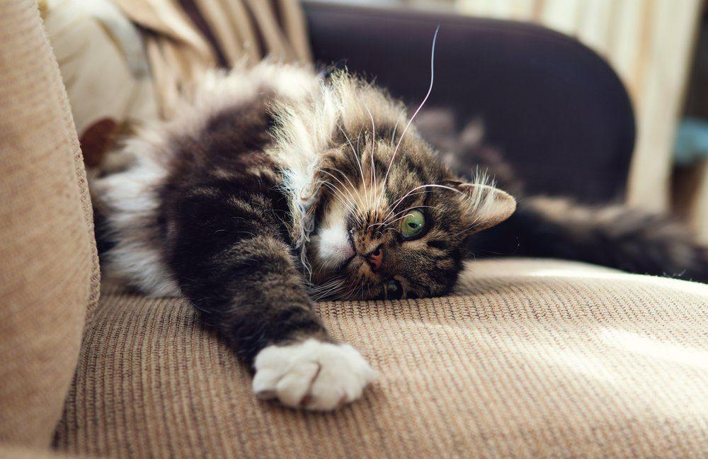 Les chats détestent l'odeur du vinaigre.