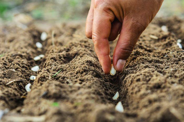 Le vinaigre de cidre contribue à stimuler la germination de certaines graines.