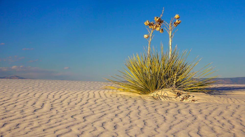 Idée de voyage : le désert de White Sands au Nouveau-Mexique.