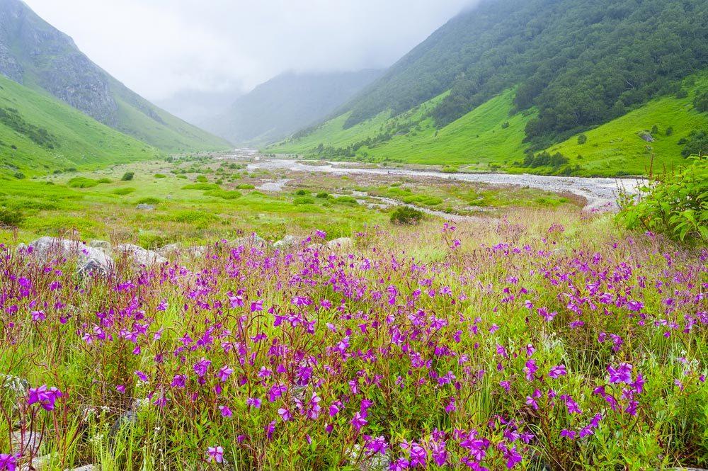 Idée de voyage : le parc national de la Vallée des fleurs en Inde.